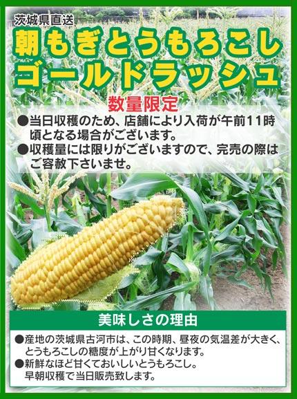 corn06.jpg